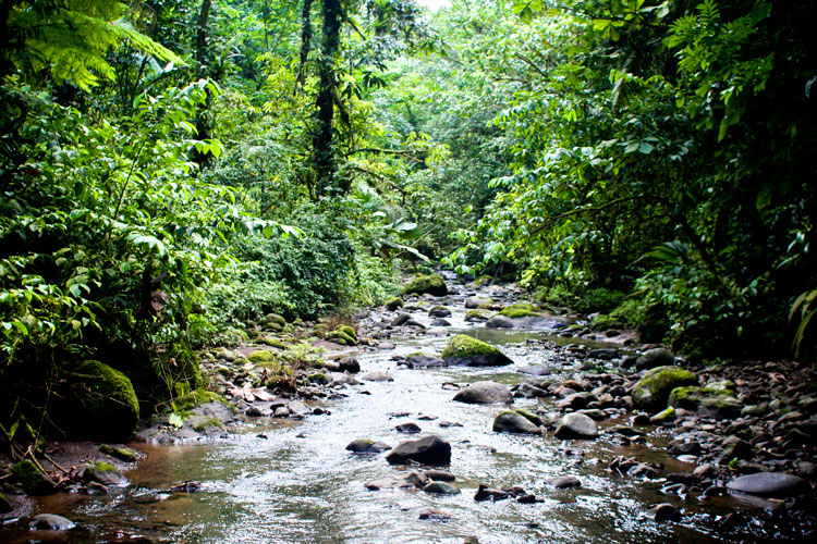 Dhanu's Rainforest Project on emaze