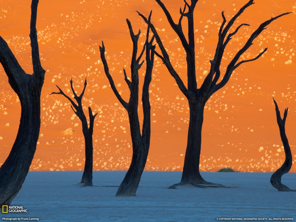 Photo of the Day: Camel Thorn Trees in Namibia