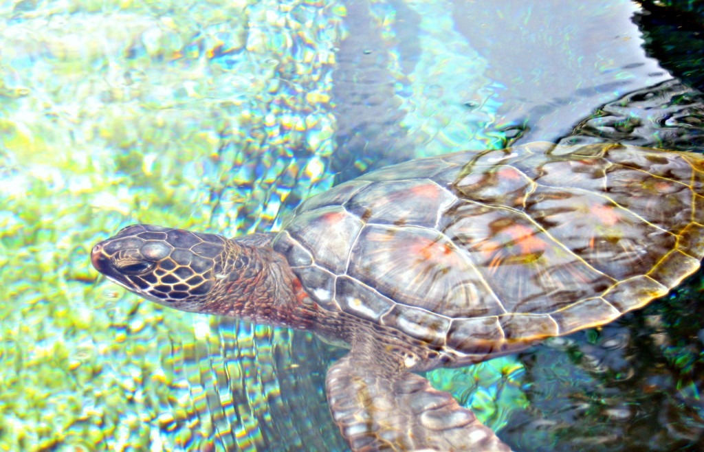 Photo of the Day: Sea Turtle