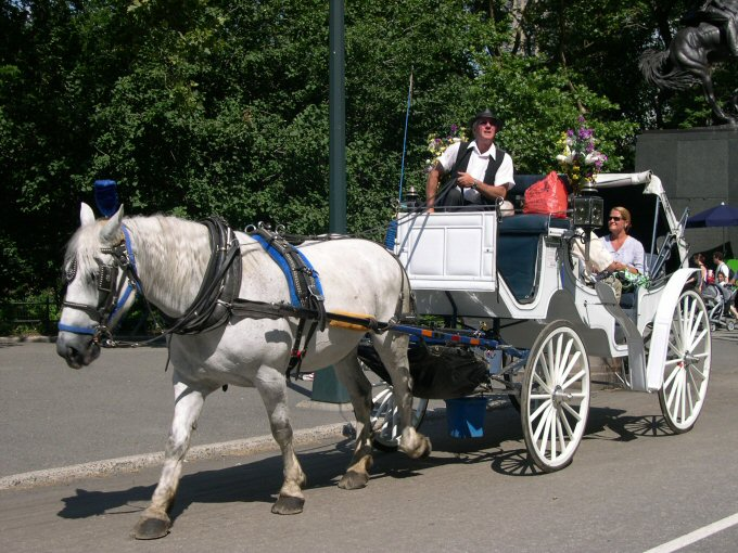 horse carriage youth are awesome horse carriage 680x510