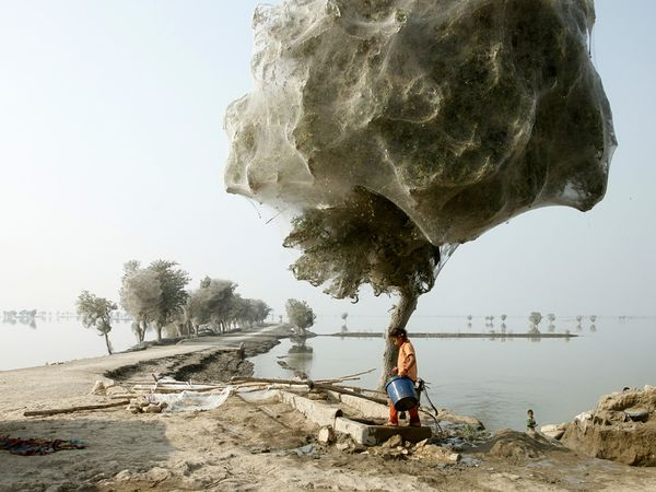 Photo of the Day: Cocooned Trees