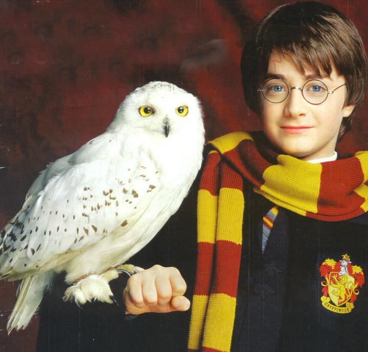 5 Reasons Why You Should Read Harry Potter  Youth Are Awesome
