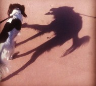 dog-with-wolf-shadow