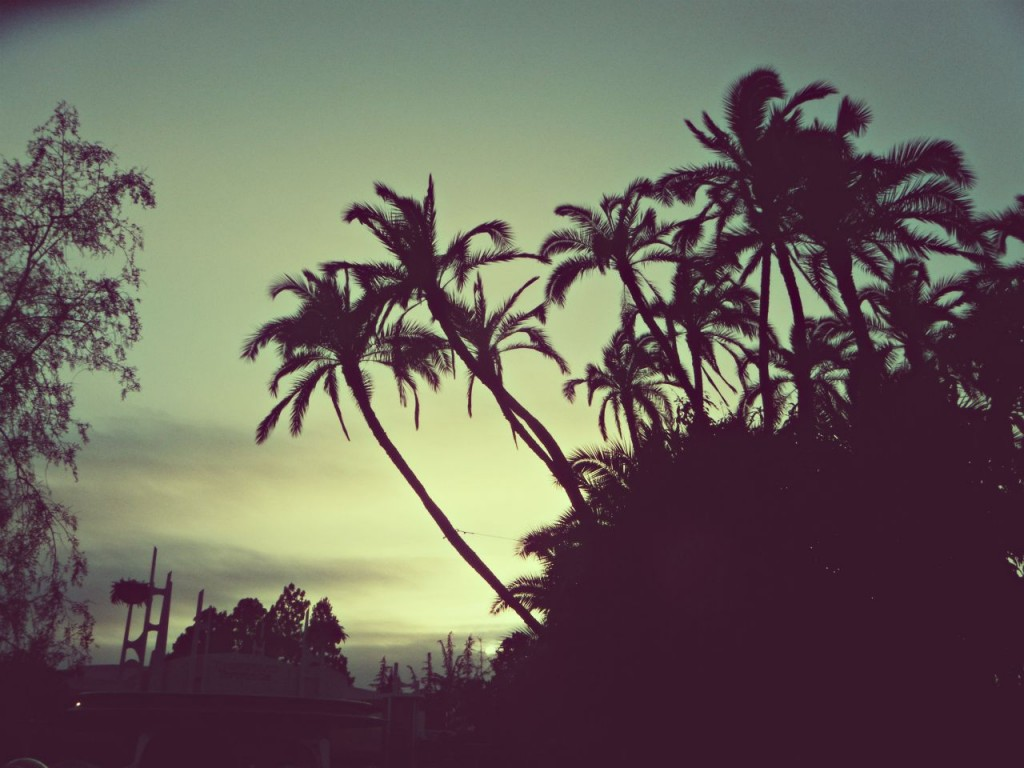 palm trees tumblr header. Photo Of The Day: Palm Trees At Disneyland Tumblr Header