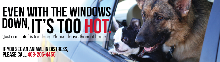 With the window down, it's still too HOT!
